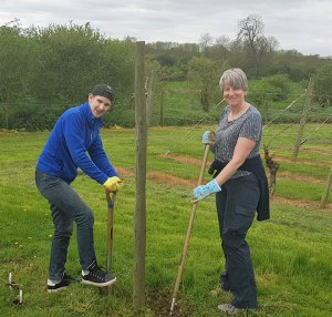Planting sunflowers at Warden Abbey vineyard.