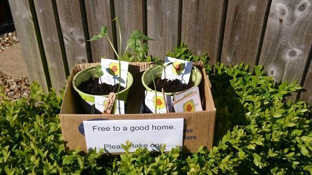Box containing free plants.